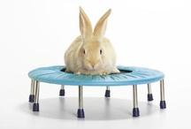 Animales y camas elásticas / Porque ni siquiera los animales se resisten a sentir sensaciones nuevas encima de una cama elástica...