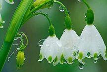 Spring flowers / Hungary