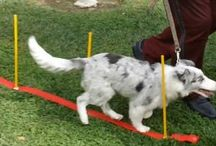 Dog Training Psychology / Training Doggies for obedience, potty training, dog agility / by New Year's Eve Parties
