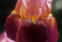 flower power / by Valerie Miller