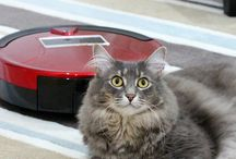 Pawesome Cats Robot Vacuum