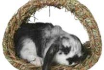 For Rosie the rabbit :)