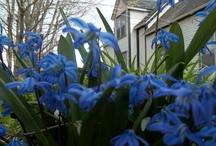 Blogs I visit / by Prairie Home