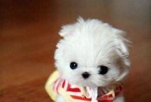 cute dogs / by Selina Zheng