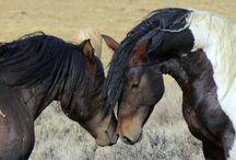 KONIE - HORSES