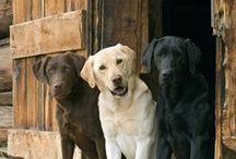 Hunder & Valper