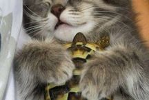 Dieren vriendschap