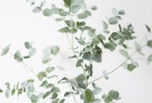 plants /