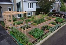 Veggie garden dreams...