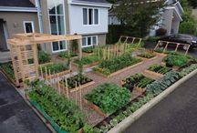 Veggie garden dreams...