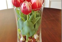Tulips indoor