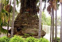 Indochine secrète / Histoire officielle et Histoire secrète (histoires vécues)