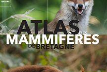 atlas des mammifères de Bretagne / Présentation de l'atlas des mammifères de Bretagne, publié aux éditions LOCUS SOLUS en octobre 2015. Plus de 70 espèces représentées par le Groupe mammalogique breton, 350 images de photographes naturalistes, des légendes, plus de 150 cartes. Un ouvrage indispensable pour tous les amoureux de la nature. A noter, l'atlas présente les 5 départements de la Bretagne historique (Loire-Atlantique incluse).