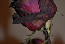 Haldokló virággyűjtemény