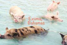 Bahamas / Beautiful islands in the Bahamas