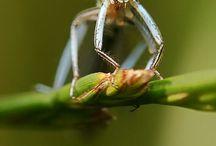 Isentos-Ordem Odonata