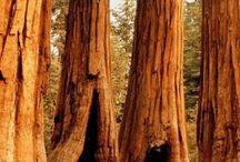 Trees/stromy