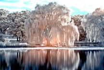 Weeping Willow Trees / by Kim Ballard