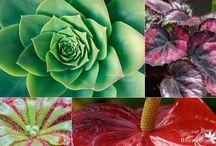 Inspiratie - Kamerplanten