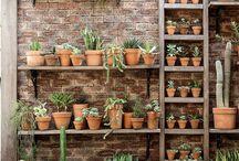 Garden terracotta pots