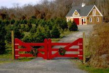 Tree Farm Dream