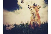 Fox obsession