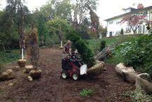 Large Tree Installations