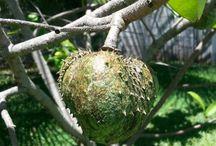 fruta caseira