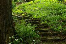 skog hage