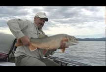 Great Fishing in Action! / Watch some amazing fishing in action from our youtube channel. http://www.youtube.com/user/anglersworldlive
