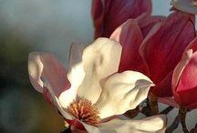 inspirational flowers