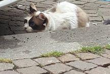 Turin cats