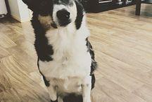Dog paw protection