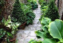 Garden and plants / by Sandra Temel