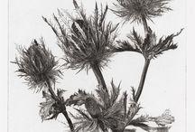 Botanic illustration  / by Emma van Lint