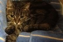 My kitty, Kitty