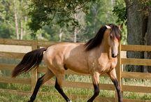 The Horse / by Stephanie Lena