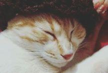 Fred Weasley  O gato