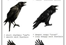 Magical crows For Reg