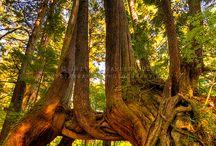 Nature & Scenery