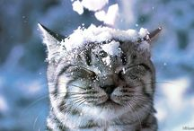 kitties / by Kristina Virgin