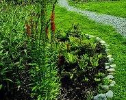 Garden, slopes / by Jane Willis