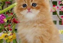 Kittens & Cats / I love little kittens, they are so cute! I just can't stop smiling when there's a kitten in the room!