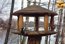 Karmnik Online dla ptaków w Bieszczadach na stronie Ptaki24.pl / Interesujące zdjęcia ptaków z kamery HD na żywo (internetowej), przy karmniku dla ptaków znajdującym się nad Jeziorem Solińskim w Bieszczadach. Kamera jest dostępna całodobowo na stronie www.ptaki24.pl .