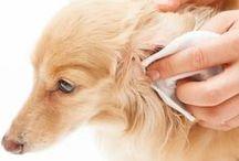 Como limpar orelha animal