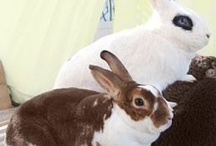 San Diego Bunny Adoptions / by Cathy Andrade