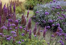 Perennial borders / Ideas of different style and colour perennial borders