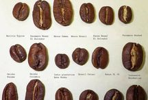 Coffee Basics