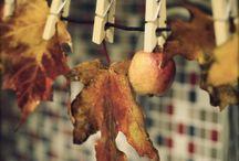 vitrine automnes