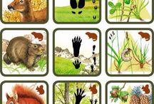 lesne zvierata